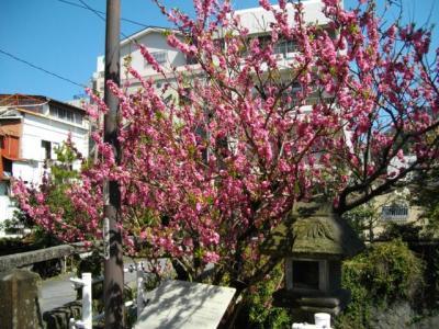 桜サク02