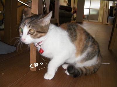 てこてこ猫01