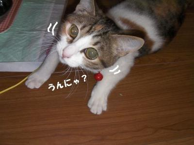 てこてこ猫02