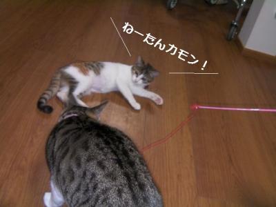 てこてこ猫04