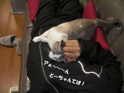 猫の節分08