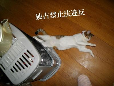 猫三昧06