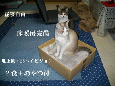 猫三昧08