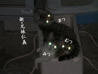 姉妹仁義01