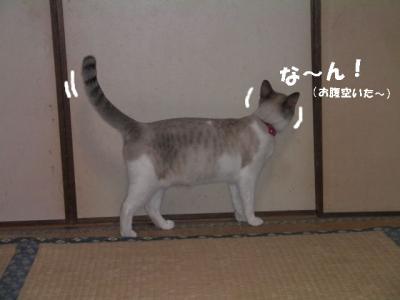 かしまし娘02