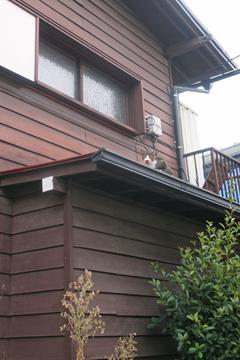 屋根上のにゃー