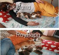 mamapapababy.jpg