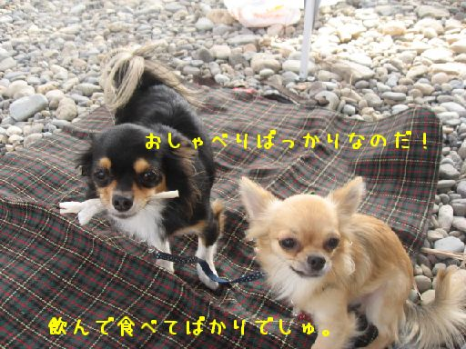 IMG_3374.jpg