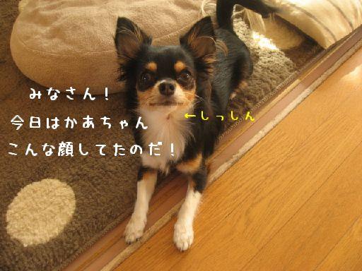 IMG_3760.jpg