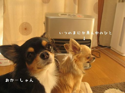 IMG_guigui.jpg