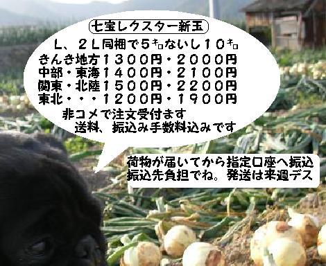 201105091921352b5.jpg