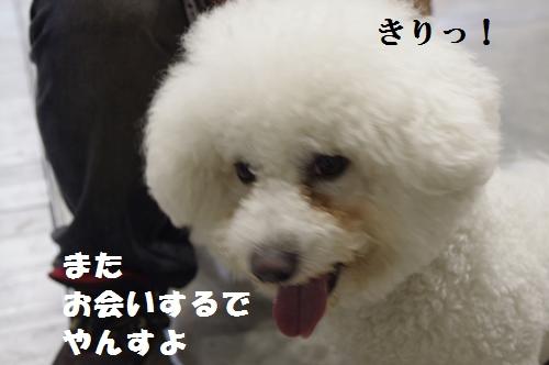_IGP9280.jpg