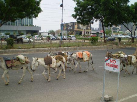 donkeys051009.jpg