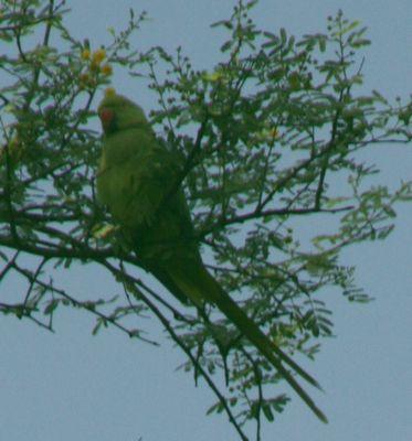 parrot-park09.jpg