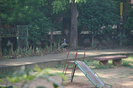 peacock-park09.jpg