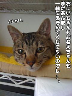 20090822_02.jpg