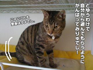 20090822_03.jpg