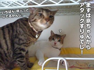 20090822_04.jpg