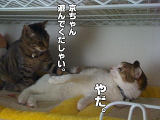20090822_05.jpg