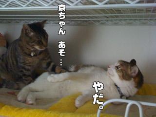 20090822_07.jpg