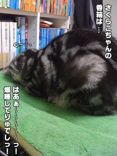 20090824_11.jpg