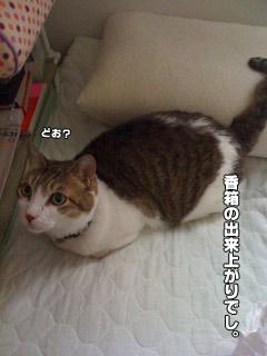 20090824_19.jpg