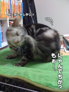 20090825_04.jpg