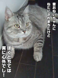 20090826_01.jpg