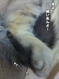 20090826_02.jpg