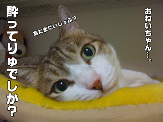 20090827_03.jpg
