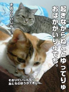 20090828_08.jpg