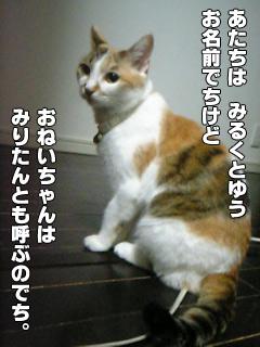 20090830_03.jpg