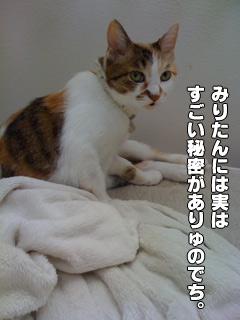 20090830_06.jpg