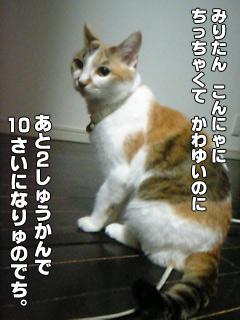 20090831_03.jpg