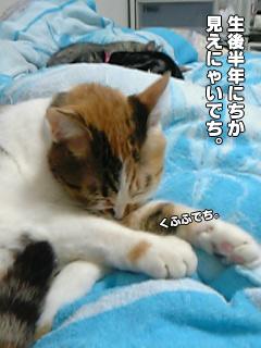 20090831_04.jpg