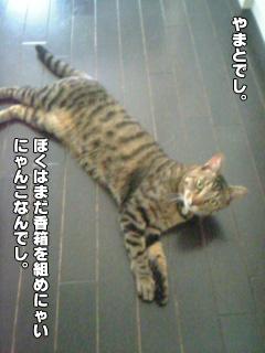 20090901_1.jpg