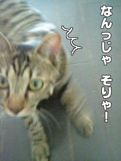20090901_5.jpg