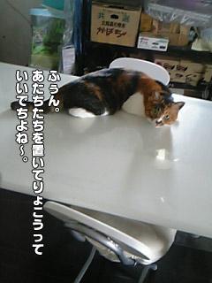 20090909_03.jpg