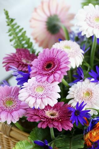 ガーベラの花かご