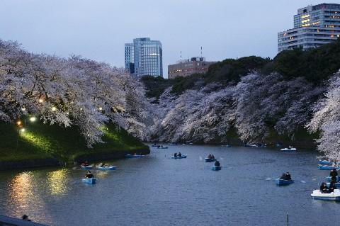 千鳥が淵3夜桜