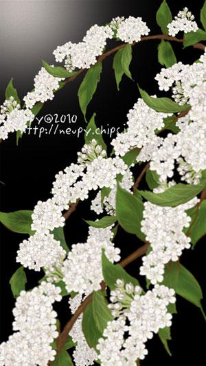 20110528_7.jpg