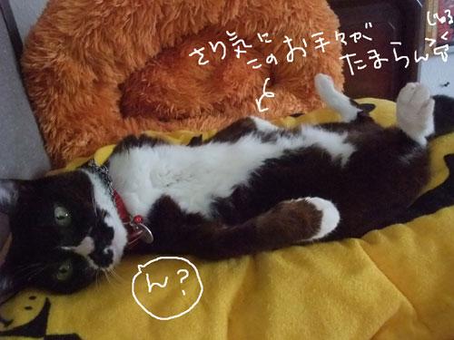 20110701_2.jpg