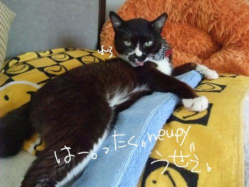 20110716_4.jpg