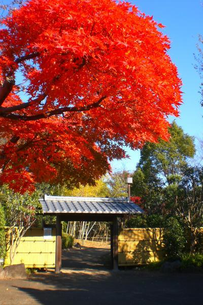 関宿城博物館の紅葉3