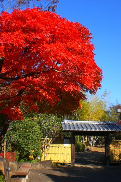 関宿城博物館の紅葉2