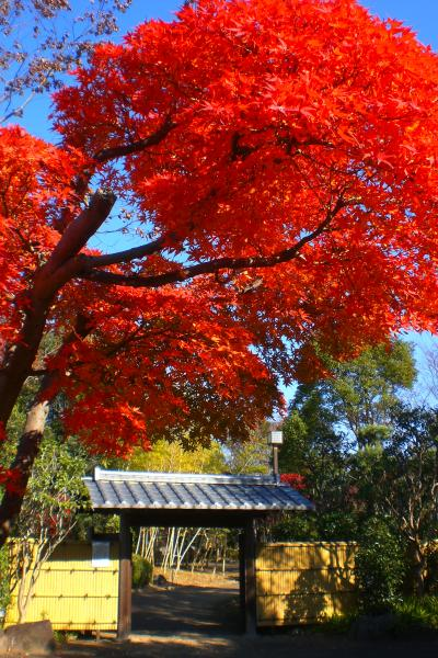関宿城博物館の紅葉1