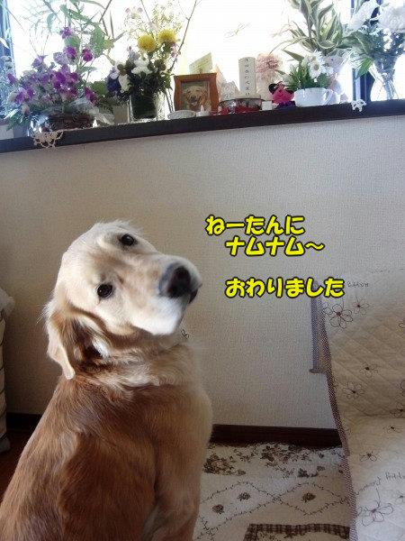 CIMG8734.jpg