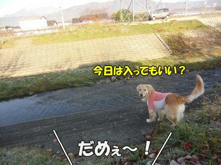 CIMG9260_20111126121622.jpg