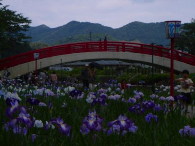 1106-Syoubu10.jpg