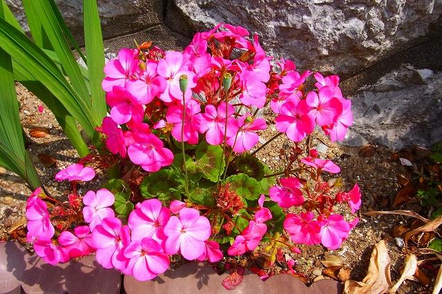 110505-flower015.jpg